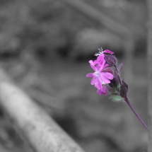 Blume auf Schwarzweiss