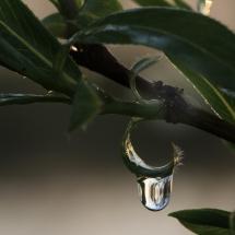 Fliege über Wassertropfen