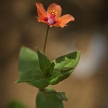 Mini Blüte in Orange