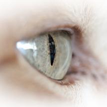 Eye of the Tiger (Nur unsere Hauskatze)
