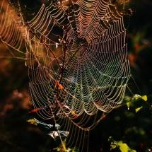 Spinnwebe in Regenbogenfarben