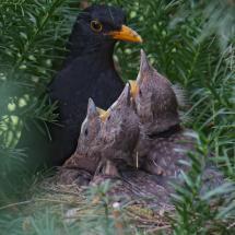 Nest Hochformat