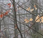 Winterliche Motive Um Den Lusen-Gipfel