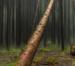 Achtung: Baum-Fällt