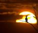 Reiher Im Sonnenuntergang